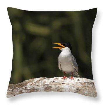 River Tern Throw Pillow by Ramabhadran Thirupattur
