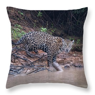 Riverbank Jaguar Throw Pillow by Wade Aiken