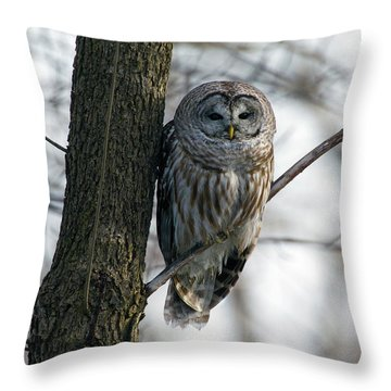 Roadside Barred Owl Throw Pillow