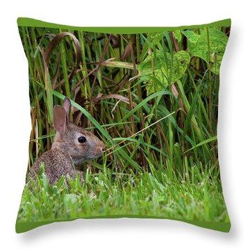Roadside Rabbit Throw Pillow