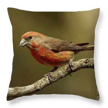 Roaming Crossbills-1 Throw Pillow