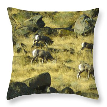Roaming Free Throw Pillow