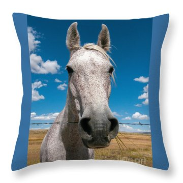 Roan Throw Pillow