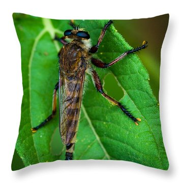 Robber Fly 1 Throw Pillow