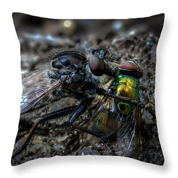 Robber Fly Eating Green Bottle Fly Throw Pillow by Bob Orsillo