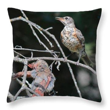 Robin And Cardinal 2664 Throw Pillow