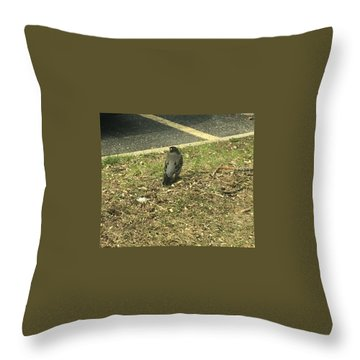 Robin At The Ymca  Throw Pillow