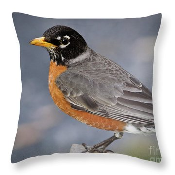 Robin Throw Pillow by Douglas Stucky