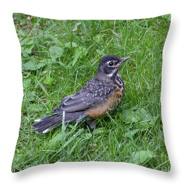 Throw Pillow featuring the photograph Robin Fledgling by Chris Scroggins