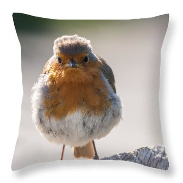 Robin Front Throw Pillow