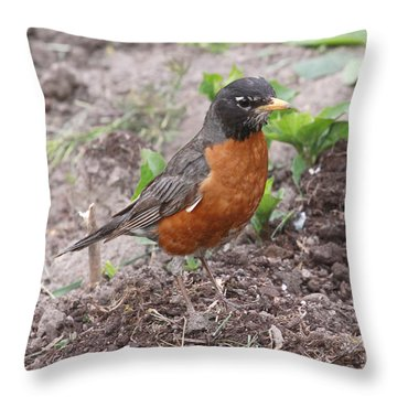 Robin Hunting Throw Pillow