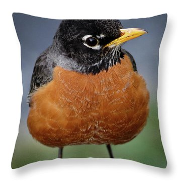 Robin II Throw Pillow by Douglas Stucky