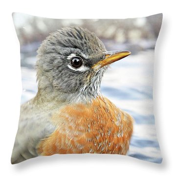 Throw Pillow featuring the photograph American Robin In The Bird Bath by Jennie Marie Schell