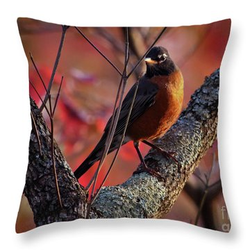 Throw Pillow featuring the photograph Robin In The Dogwood by Douglas Stucky