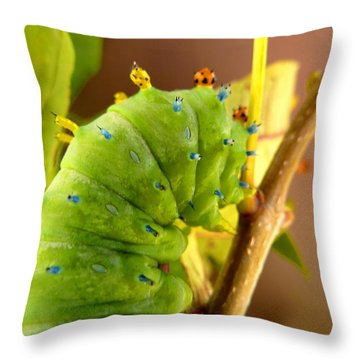 Throw Pillow featuring the photograph Robin Moth Caterpillar by Claire Bull