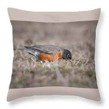 Throw Pillow featuring the photograph Robin Pulling Worm by Tyson Smith