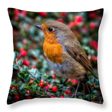 Robin Redbreast Throw Pillow by Adrian Evans