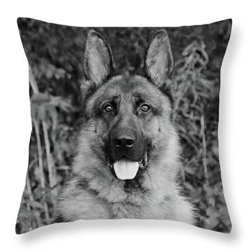 Throw Pillow featuring the photograph Rocco - Bw by Sandy Keeton