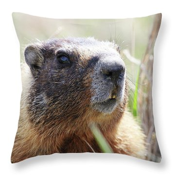 Rock Chuck Throw Pillow