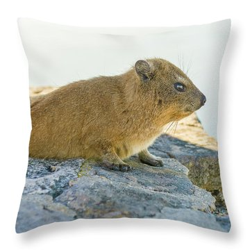 Rock Hyrax On Table Mountain Cape Town South Africa Throw Pillow