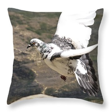 Rock Pigeon In Flight Throw Pillow