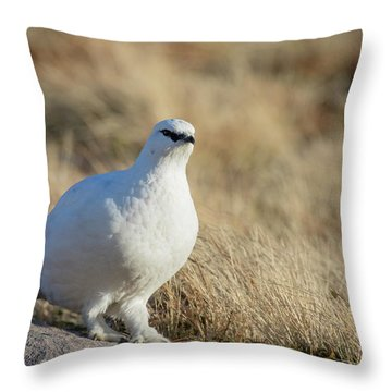 Rock Ptarmigan Throw Pillow