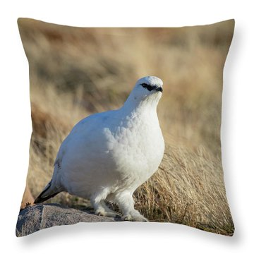 Throw Pillow featuring the photograph Rock Ptarmigan by Karen Van Der Zijden