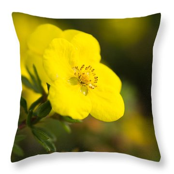 Throw Pillow featuring the photograph Rock Rose by Erin Kohlenberg