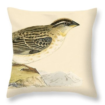 Rock Sparrow Throw Pillow by English School