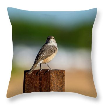 Rock Wren 1 Throw Pillow