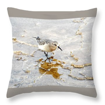 Rock Wren In Mammoth Springs Yellowstone Throw Pillow