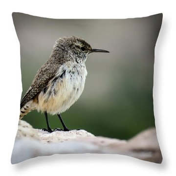 Rock Wren Throw Pillow