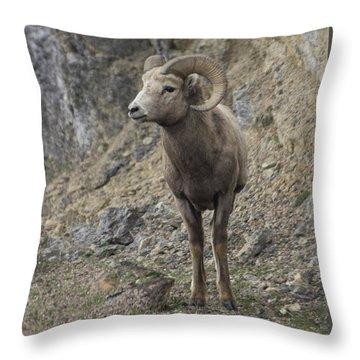 Rockies Big Horn Throw Pillow