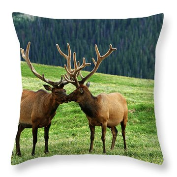 Rocky Mountain Elk 2 Throw Pillow