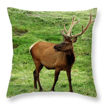 Throw Pillow featuring the photograph Rocky Mountain Elk 3 by Marie Leslie