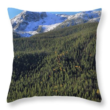 Throw Pillow featuring the photograph Rocky Mountain Evergreen Landscape by Dan Sproul