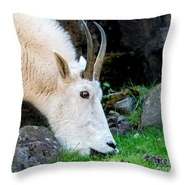 Rocky Mountain Goat Busy Eating Throw Pillow
