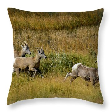 Rocky Mountain Goats 7410 Throw Pillow
