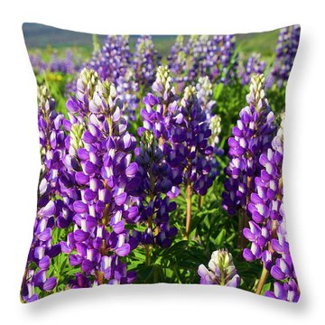 Rocky Mountain Lupines  Throw Pillow by Aaron Spong