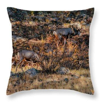 Rocky Mountain National Park Deer Colorado Throw Pillow