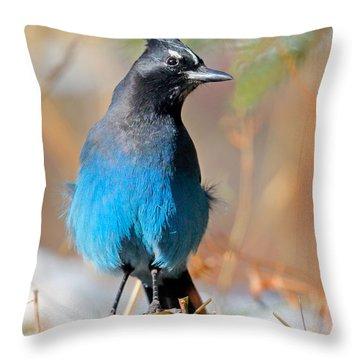 Rocky Mountain Steller's Jay Throw Pillow