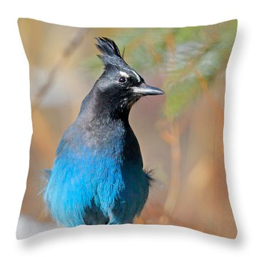 Rocky Mountain Steller's Jay Throw Pillow