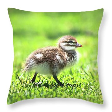 Rogue Duckling, Yanchep National Park Throw Pillow by Dave Catley