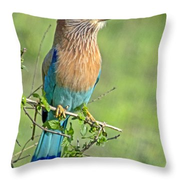 Roller Looking On Throw Pillow by Pravine Chester