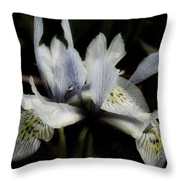 Throw Pillow featuring the photograph Romantic Dwarf Iris by Richard Cummings