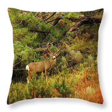 Roosevelt Deer Throw Pillow