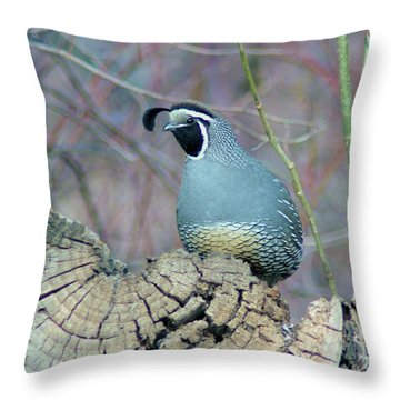 Rooster Quail  Throw Pillow by Jeff Swan