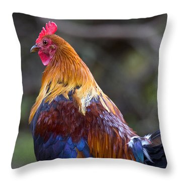 Rooster Rooster Throw Pillow by Mike  Dawson