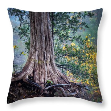 Rooted Throw Pillow by James Barber
