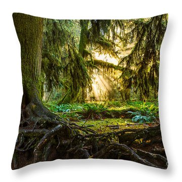 Roots And Light Throw Pillow